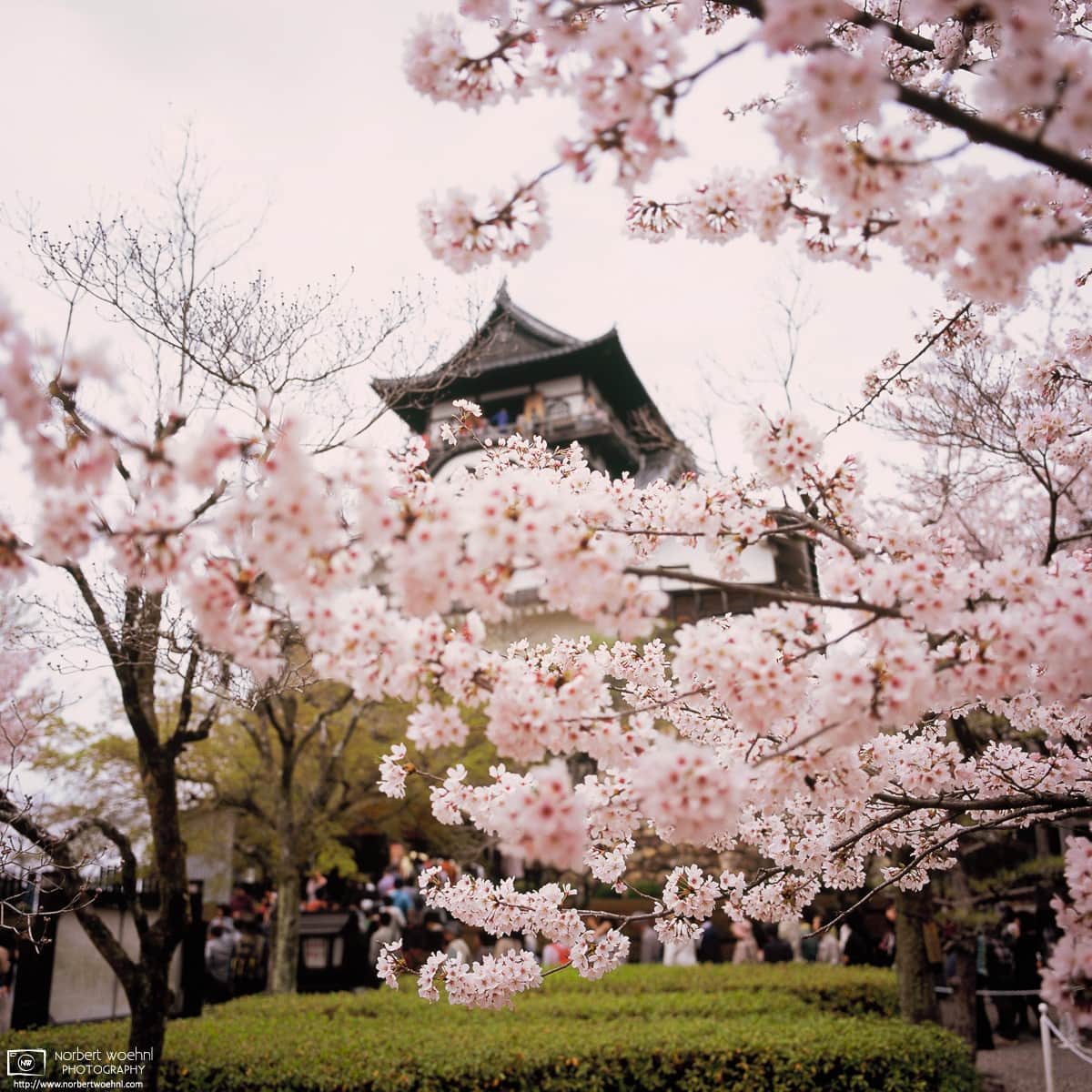 Behind the Blossoms, Inuyama Castle, Japan Photo