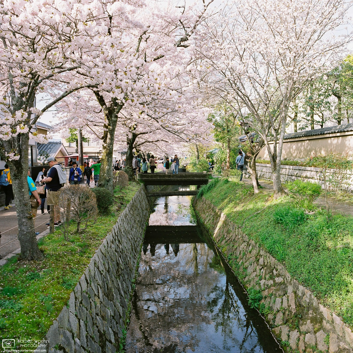 Cherry Blossoms at the Philosopher's Path, Kyoto, Japan Photo