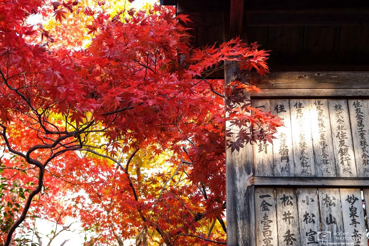 Autumn at Seiryoji Temple, Sagano, Kyoto, Japan Photo