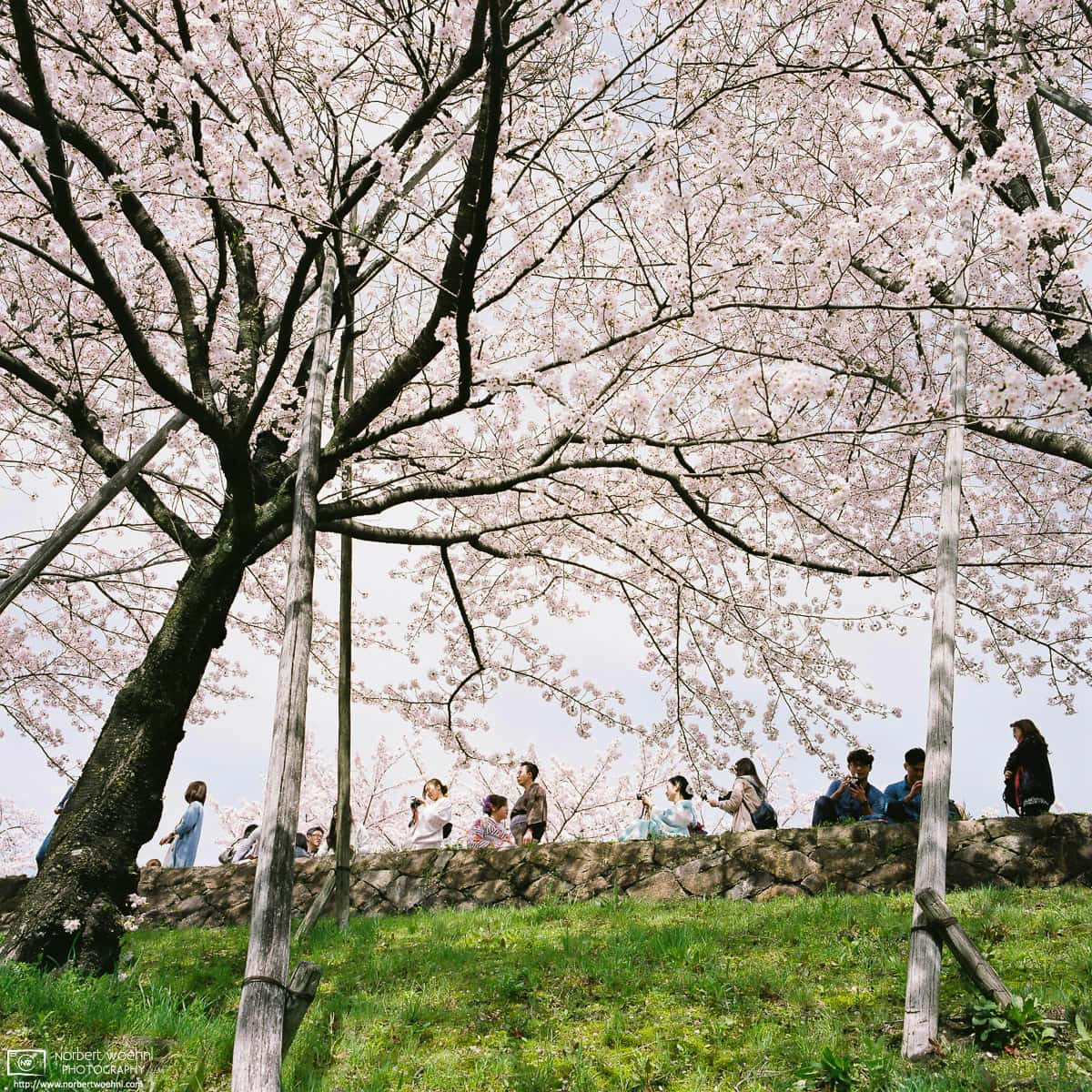 Visitors enjoying Hanami (花見; Cherry Blossom Viewing) along the Keage Incline in the Higashiyama district of eastern Kyoto, Japan.