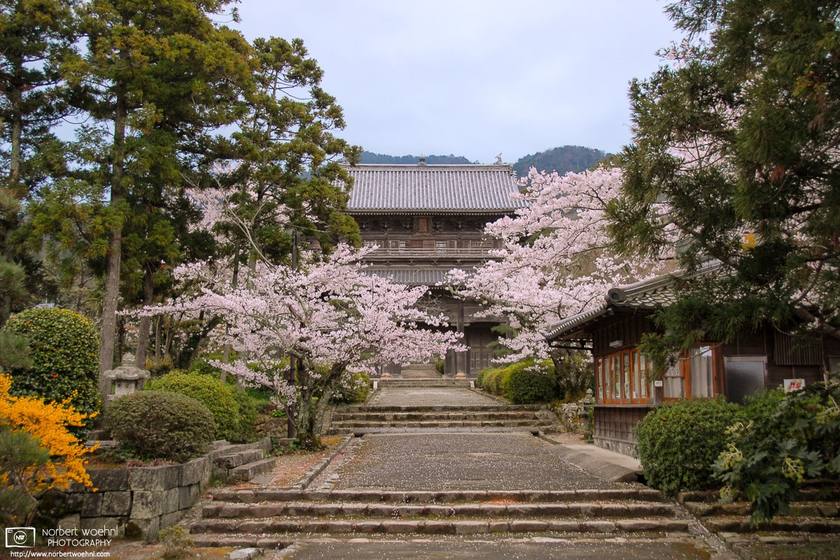A quiet afternoon visit to Tōkōji Temple (東光寺) in the city of Hagi in Yamaguchi Prefecture, Japan.