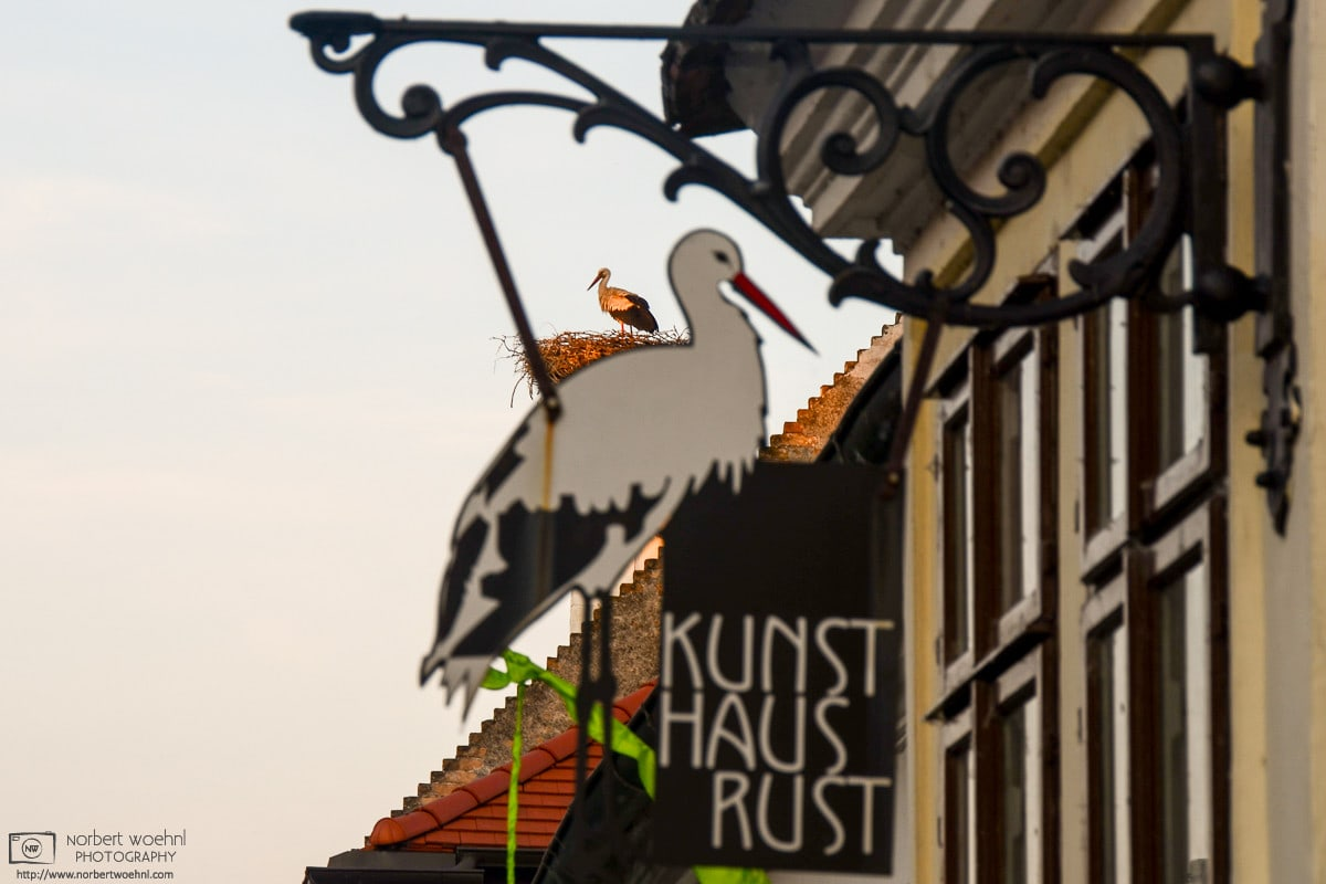 """A white stork is seen in its rooftop nest in the """"stork village"""" of Rust, Austria, behind a locally-themed sign on a building."""